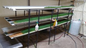 New, improved fodder system in steel insulated building.