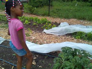 3-starfish-camper-uncovering-kale