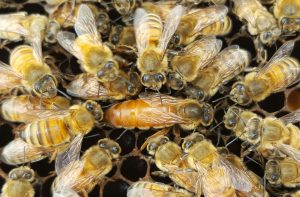 This is a queen bee in the center of the photo