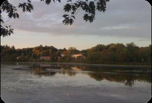 Figure 1. Lake Ripple in Grafton, MA overgrown with aquatic vegetation (14-Sept 2009).