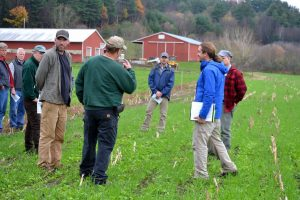 farmers observing a standof cover crops