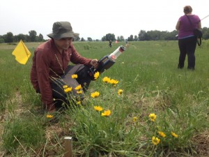 Logan Rowe use a bee vacuum to sample pollinators attracted to lance-leafed coreopsis