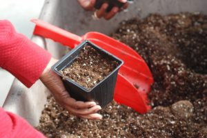 """Attendees at SU 2016 Fall Garden Workshop fill 4"""" pots with media."""