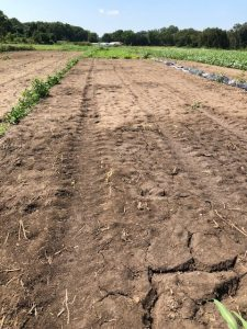 Picture of compaction created by occulation tarp