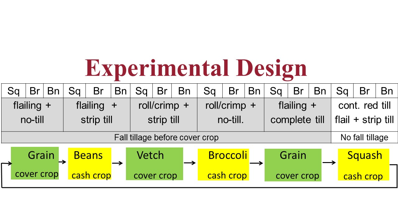 Figure 1. One of four replicates (top) and rotation scheme (bottom) in the WSU Puyallup Long-term Organic Reduced Tillage Systems Experiment. Sq=squash; Br= broccoli; Bn = beans.