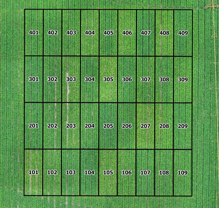 Figure 1. Plot arrangement as seen on 10 September 2020.