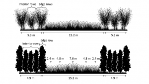 Fish Creek willow (top) and NM6 poplar (bottom) alley cropping system configuration and herbaceous crop sample locations with distance from tree rows.    At Empire, sampling distances are denoted as either west or east of the center of the alley.