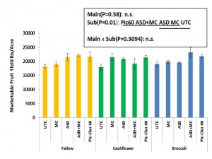 Figure 6. Cumulative marketable fruit yield of strawberries at the Salinas site. Main plots are fallow, cauliflower and broccoli. Sub plots are UTC (untreated check), MC (mustard cake), ASD (anaerobic soil disinfestation) and ASD+MC. Treatments on the same line are not significantly different (Tukey's HSD test (P=0.05)).