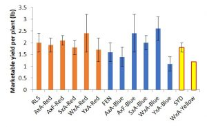 Fig. 1: Yields of potato breeding populations and standard potato varieties at West Madison Agricultural Research Station organic trials, 2016.