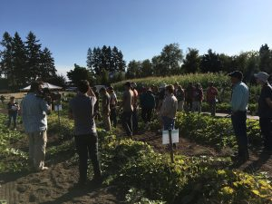 Figure 8 is a photo of a vegetable variety field day held at the North Willamette Research and Extension Center in Aurora, Oregon, on September 14, 2017. On the left and in the foreground is a speaker, a man. Throughout the rest of the photograph are field day participants, about 20 individuals. The upper third of the photos is blue, blue sky, and the sun is just above and to the right of the upper right hand corner of the photo. Across the horizon we see assorted deciduous trees and Douglas Firs. While this field day included the clubroot resistant cultivars, the photo was taken in a wide-row planting of winter squash. In the middle background is a strong stand of sweet corn. Judging by the length of the shadows, the phot was taken just after 5 PM.