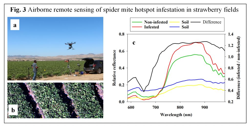 A: An image of a UC Davis employee who flies a drone with a hyperspectral camera over a commercial strawberry field. B: An image of the acquired hyperspectral imaging data. C: A graph showing the average reflectance profiles from soil, strawberry plants subjected to spider mite infestations, non-infested strawberry plants, and the difference between non-infested and infested plants. The x-axis shows the wavelength in nanometers, ranging from 586-980 nm. It is seen that spider mite infestation causes a marked increase in leaf reflectance in spectral bands from 700-980 nm.