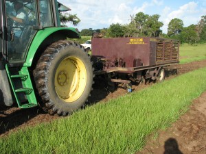 Strip-planting of perennial peanut in Inverness, FL