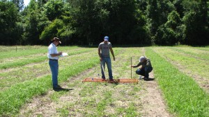Assessment of soil cover and perennial peanut spread; May 2015