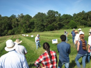 Field day at Mr. Mack Glass farm demonstrating the strip-planting of perennial peanut to producers