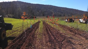 Maple field plot establishment, Fall 2015