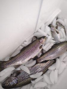 Fish on Ice 1.21.21