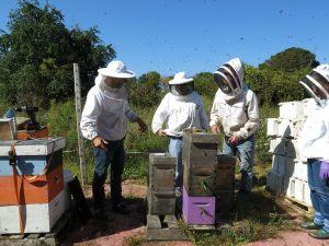 NH Beekeepers at a field training
