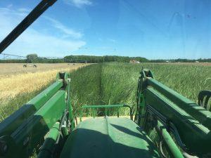 Planting corn into rye forward