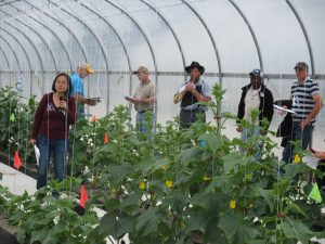 Figure 6. Field day showing grafted cucumbers at the Southwest Purdue Agricultural Center.