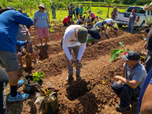 Agroforestry Design field day