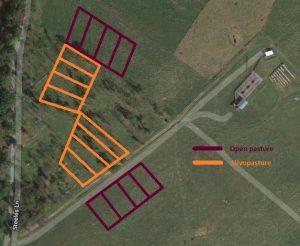 Aerial view showing 8 silvopasture plots and 8 grass pasture plots
