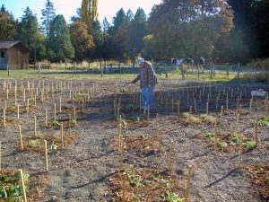 Newly planted pollinator plot receives water.