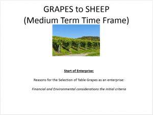 Time Horizon. Manzini Farm used a medium-term time horizon to consider the impacts of this decision.