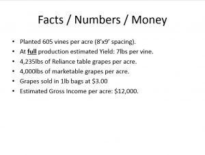 Facts and Figures: Table grapes. This image represents Manzini Farm table grape operation. The farm operators initiated a structured decision making process to determine whether to convert the table grape farm to lamb/sheep production.