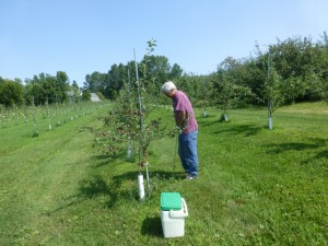 Tom Weicht collecting soil samples at Hackett's Orchard for nematode community analysis in SARE Apple Replant Disease Project.