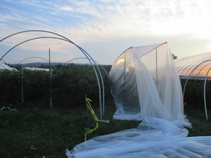 Frame for 60 gram netting