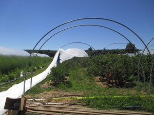 Netting attached to continuous purlin on the ground, in the process of going up.