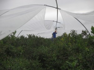 Joining netting overhead