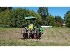 Undercutting before seeding fall cover crops in continuous reduced tillage treatment.