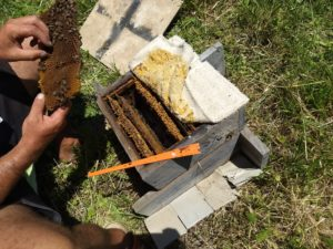 Evaluating a bee hive