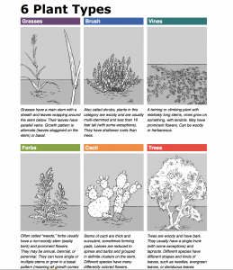 Grey and white drawings of plant types, showing leaf shape, growth form, and stem formation