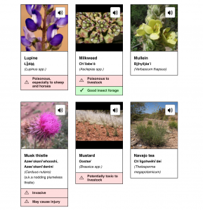 Six images of forbs found on the Navajo Nation, with sound icons indicating that Navajo audio will be played if the plant is selected.