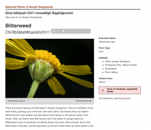Close-up of yellow flower on a green stem, sound icon indicating Navajo audio will play, and text description