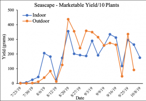 Graphs depicting strawberry marketable yield (g/10 plants) over growing season, individual charts by variety comparing indoor and outdoor production