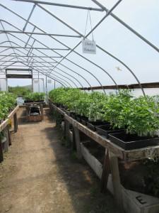 Annual Seedling sale
