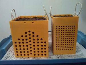 Side View of Rhizoboxes