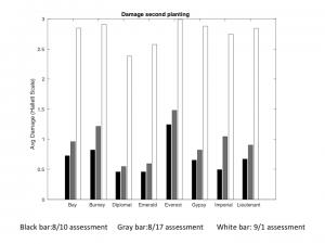 Chart of 6/21 broccoli planting Hallett Scale damage