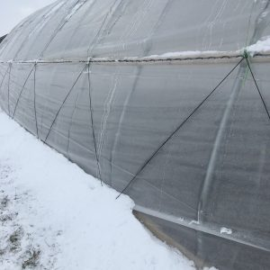 snow against the roll up sides of the tunnel, you can also see the anti billow cords that stabilize the plastic.