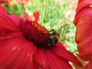 Beautiful flowers attract pollinators.
