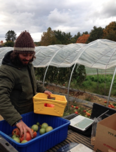 Data collection at the final harvest in Durham, 2015