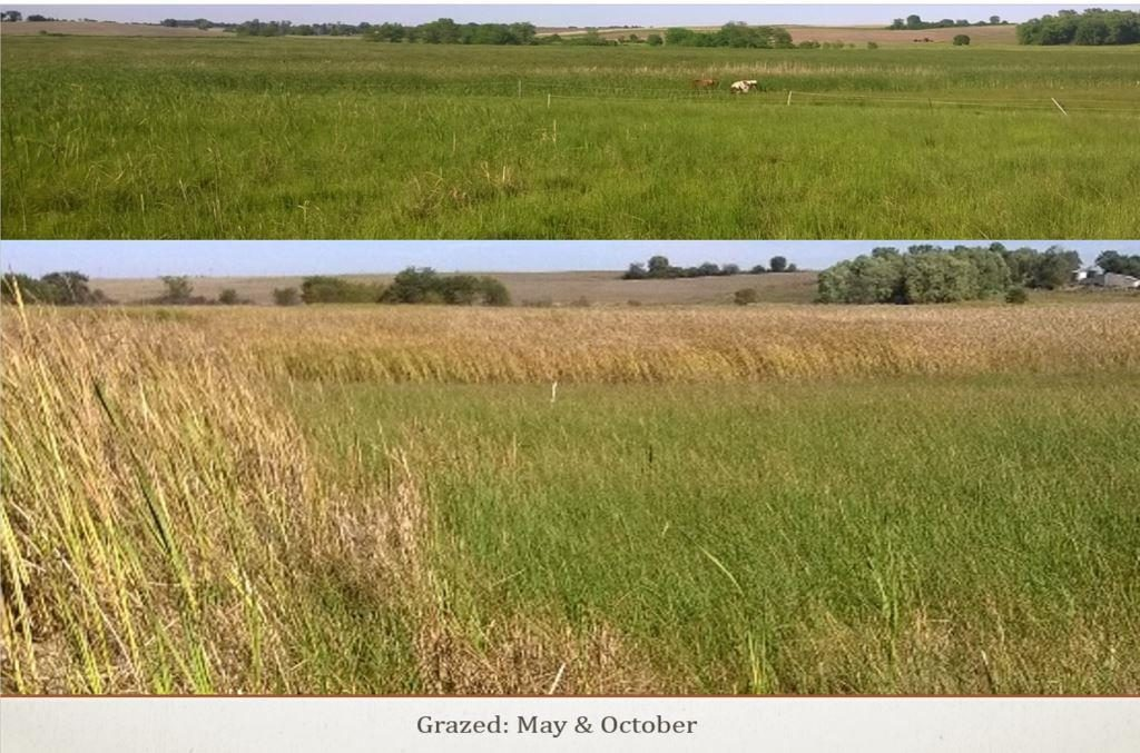 Grazed wetland acres