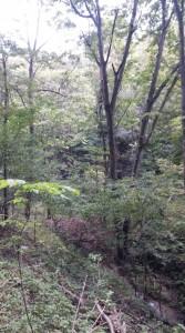 late fall defoliation 2015