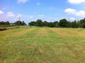 Strip preparation killing pre-existing perennial grass with glyphosate, followed by sprigging of perennial peanut rhizomes