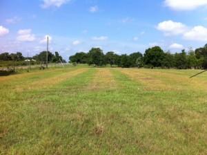 Strip preparation killing pre-existing perennial grass with glyphosate, followed by sprigging of perennial peanut rhizomes