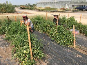 producer-participation-harvest