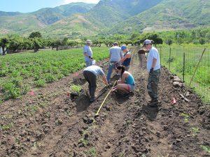 producer-participation-planting